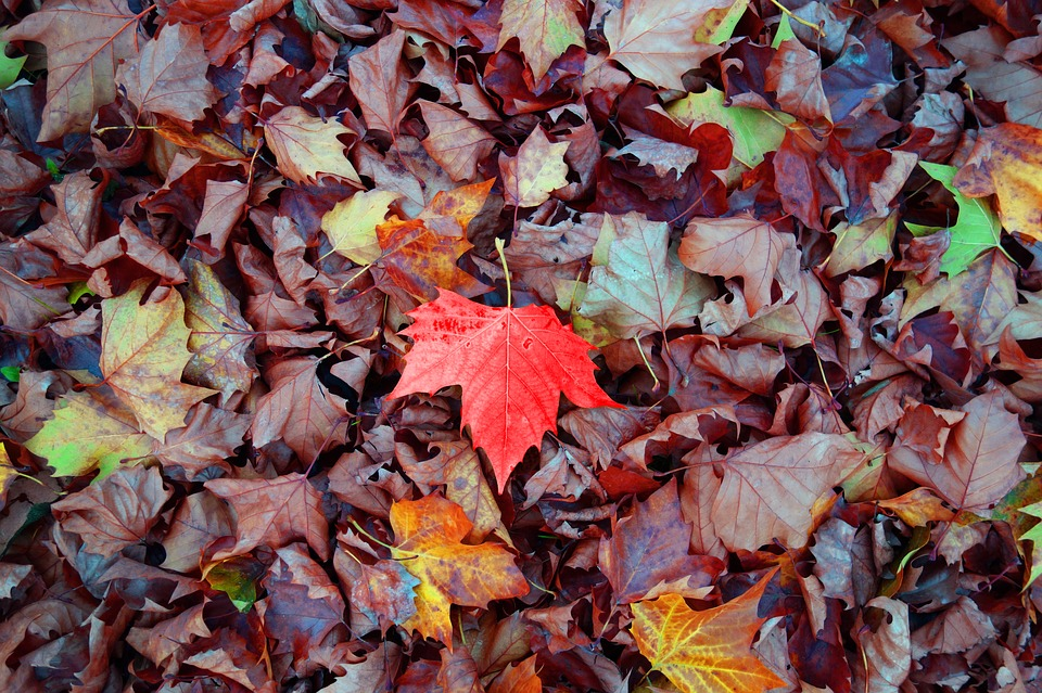 Amas de feuilles