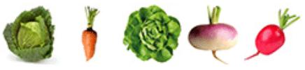 Légumes a semer en juillet
