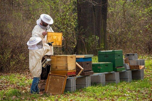 Ruche avec l'apiculteur